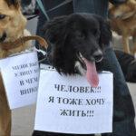 В Госдуме обновили систему штрафов за жестокое обращение с животными